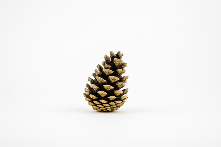 Single pine cone isolated on white.
