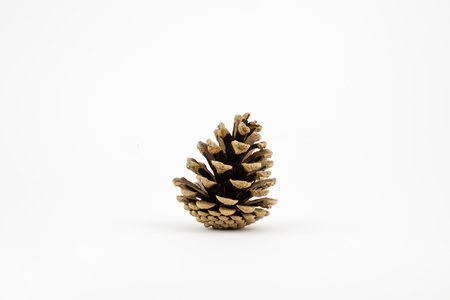 pine cone: Single pine cone isolated on white. Stock Photo