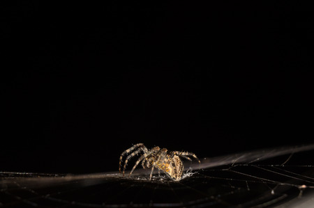 spiders web: A fly being caught in a spiders web. Stock Photo