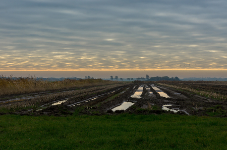 mais: Fields in the evening, left to dry because to wet to handle.