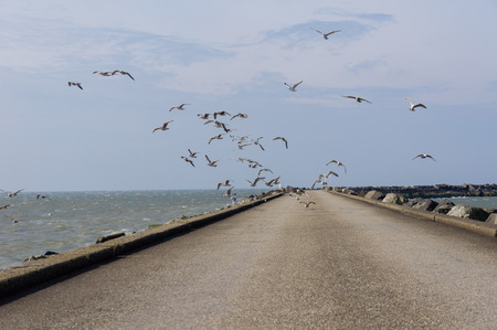 ijmuiden: Lots of birds on this windy day at the beach of IJmuiden Stock Photo