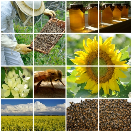 Collage of various beekeeping images photo