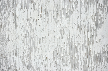White background of old barn door with peeling paint photo
