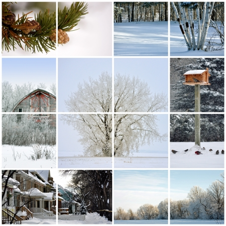 feeder: Collage made up of various winter images