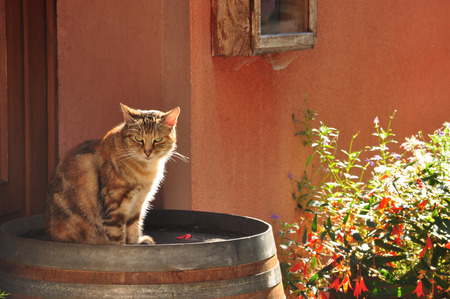 sun lit: Backlit cat, sitting on a barrel in the afternoon sun Stock Photo