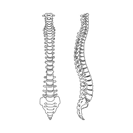 Black silhouette of heath human spine isolated on white background Vector Illustration Illustration