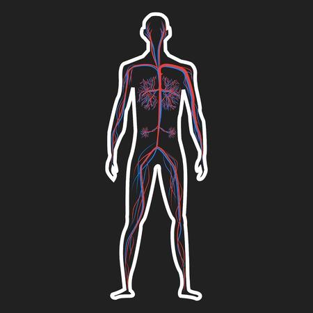 Abstract blood circulation system of human on dark background vector illustration 矢量图像