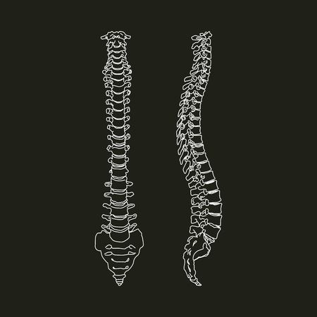 White silhouette of human spine isolated on black background Vector Illustration
