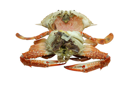 blue swimmer crab: Streamed  boiled Flower crab  Blue crab  Blue swimmer crab  Blue manna crab  Sand crab isolated on white background