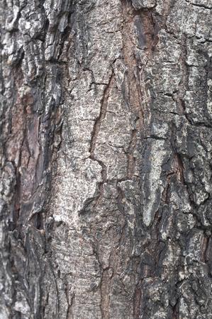 wrinkled rind: Close up of wood peeling texture Stock Photo