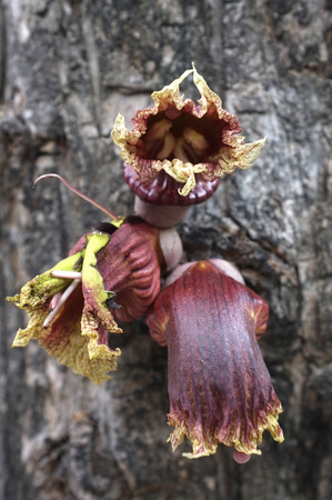 parasitic: Parasitic plant growing on tree