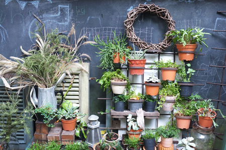 鍋で多くの植物の庭の装飾 写真素材