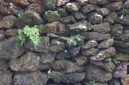 ferns: Ferns grow on rock