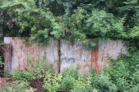 oxidize: Abandoned rusty metal fence covered with tree and plant