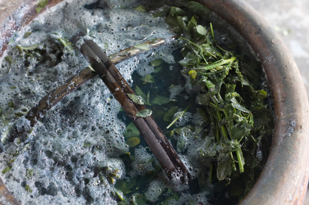 Soaking Indigo leaves and tree for The process of Indigo cake in water.