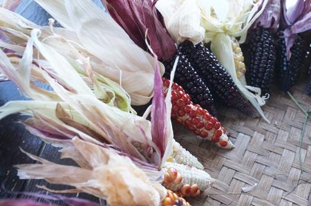 Colorful ears of dried corn at Sakon Nakhon , Thailand