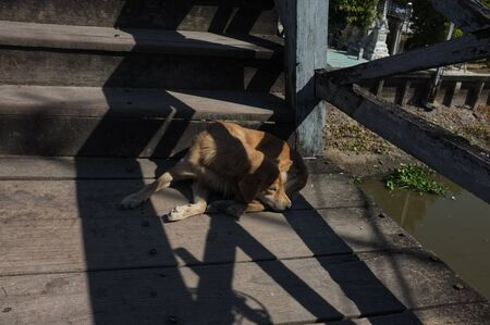 A dog resting in the sun on the Wooden bridge. A dog sleeping on the Wooden bridge