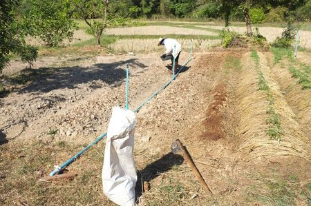 Farmer plowing soil for planting , The theory of soil cover of King Rama 9 is a way to grow plants and trees to grow and correct according to academic principles.