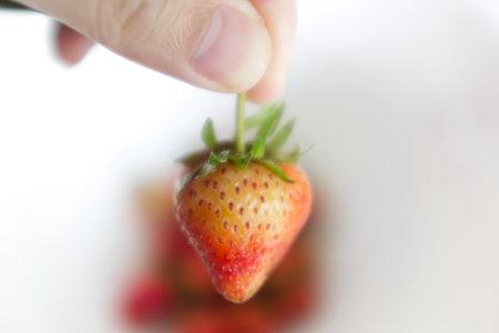 Hand holding strawberry on white background Stockfoto