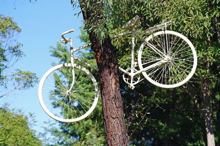 White Bicycle stuck up in a tall tree