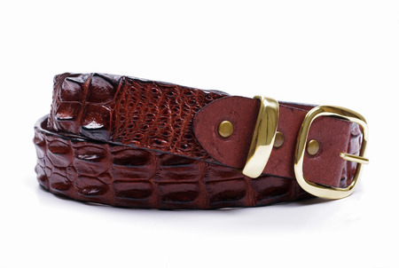 crocodile skin leather: crocodile skin leather belt Stock Photo