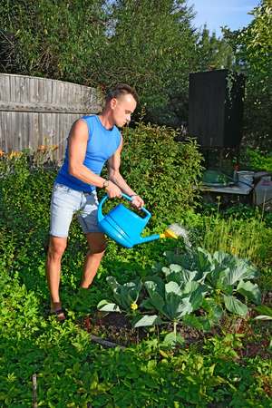 plot: Young man watering the cabbage in the garden on the plot in the summer