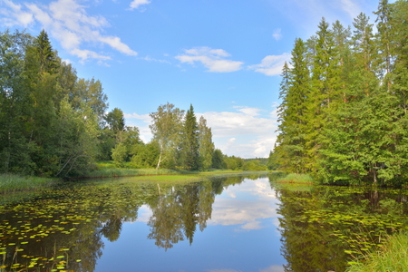 Landscape with blue sky, pine trees and a river with thickets of water lilies in July Stock Photo