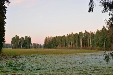 leningradskaya: Field in the Park at sunset in late autumn. Pavlovsk in late autumn