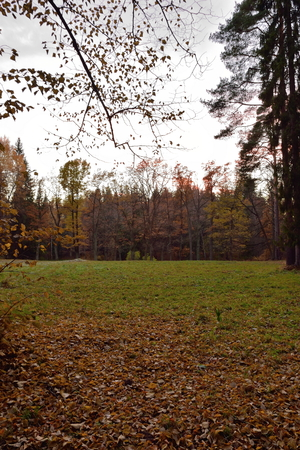 dark alley: Field in the Park at sunset in late autumn. Pavlovsk in late autumn