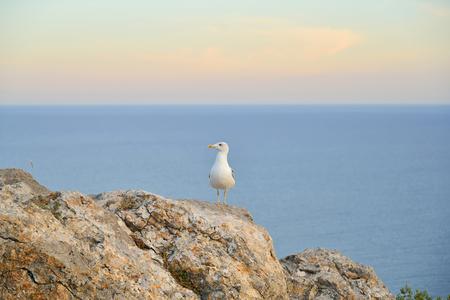 sudak: Seagull sitting on a rock by the sea. Sudak. Crimea