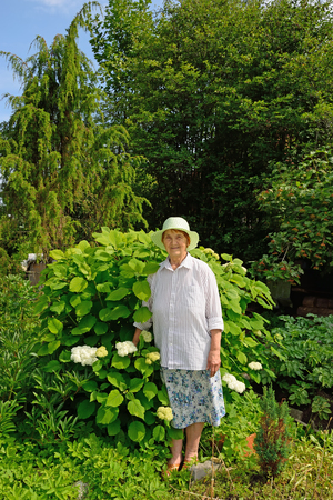 An elderly woman stands next to a large hydrangea Bush white.