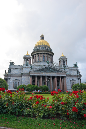 St. Isaacs Cathedral and the growing of a rose on St. Isaacs square in the summer in St. Petersburg.