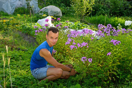 The young man smiles and cuts the Phlox on the plot in the summer on a Sunny day.