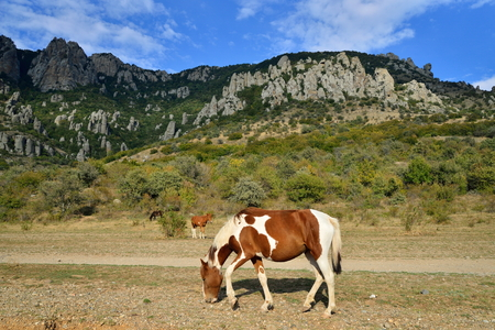 A horse with a foal grazing in the valley of ghosts in the vicinity of Alushta. Crimea