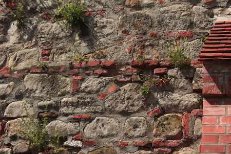 penetrating: Solid Red Brick and Granite Wall with flowers and grasses penetrating