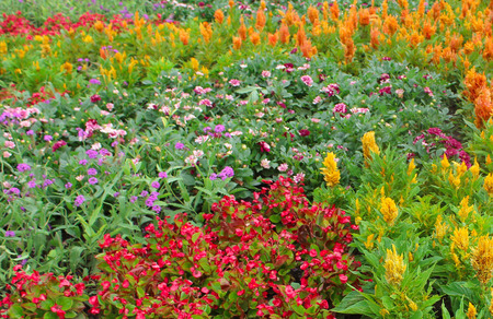 Field of Multi-colored Flowers Imagens