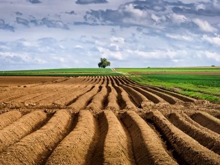 furrow: Furrow fields in German countryside.