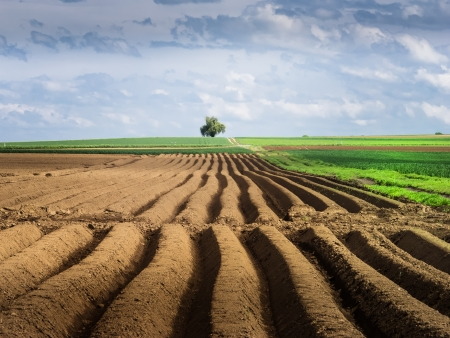 arable land: Green arable land and lonly tree in the background  Stock Photo