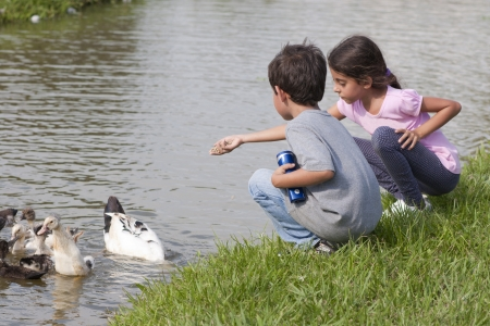 Children Feeding Ducks At The Farm