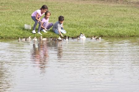 animals feeding: Children Feeding Ducks At The Farm