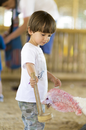 Little Boy feeds Turkey at the Zoo Stock Photo