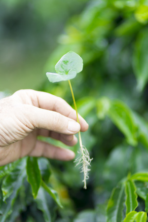 seeding: Hand Holding a Small Green Plant Agriculture and Seeding Plant seed growing in Farm