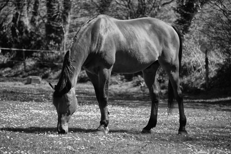 Horse grazing closeup photo. Stock Photo