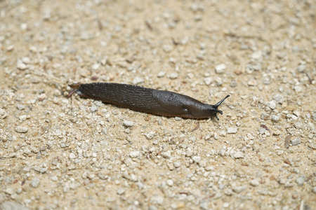 Slug moving away. Standard-Bild