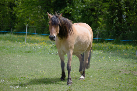 Mare in a meadow