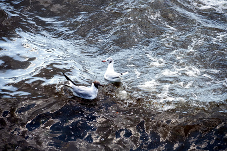 seagulls on the water background. Imagens