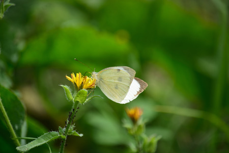 butterfly foraging the flowers.