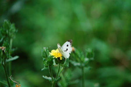 Butterfly foraging on a flower.