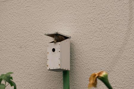 DIY, wooden bird nest. 版權商用圖片