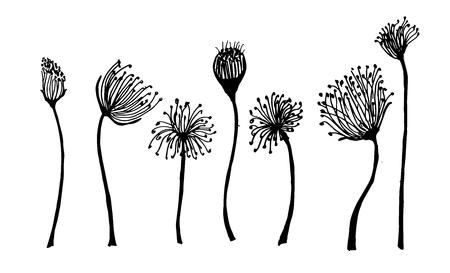 flower fields: Line art flowers, roses and peonies